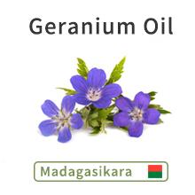Geranium Oil Pelargonium graveolens