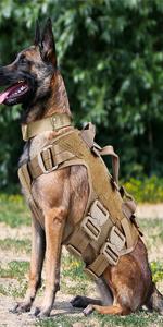petac gear dog
