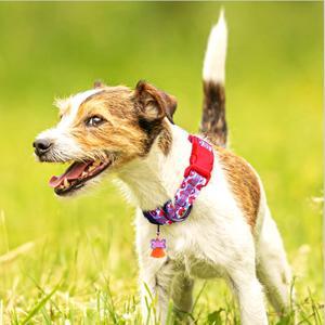reflective dog collar for medium dogs