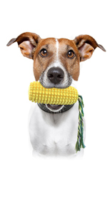 squeaky corn dog teeth cleaning toy