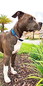 Dog collar,dog leash, pet accessories, puppy collar, reflective dog collar