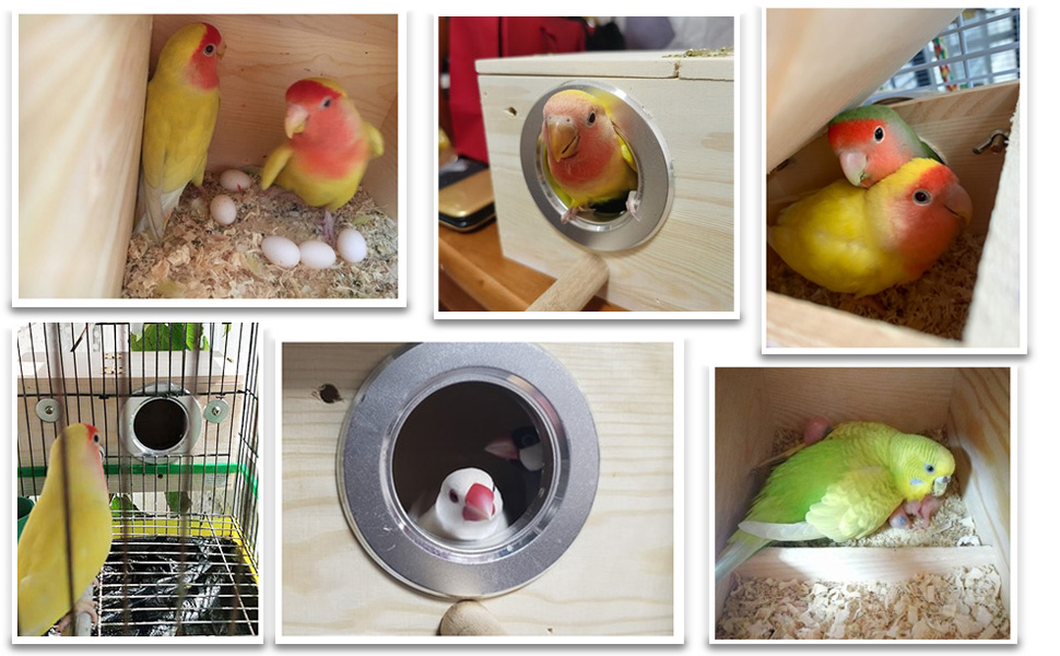 This is a warm nest full of love!