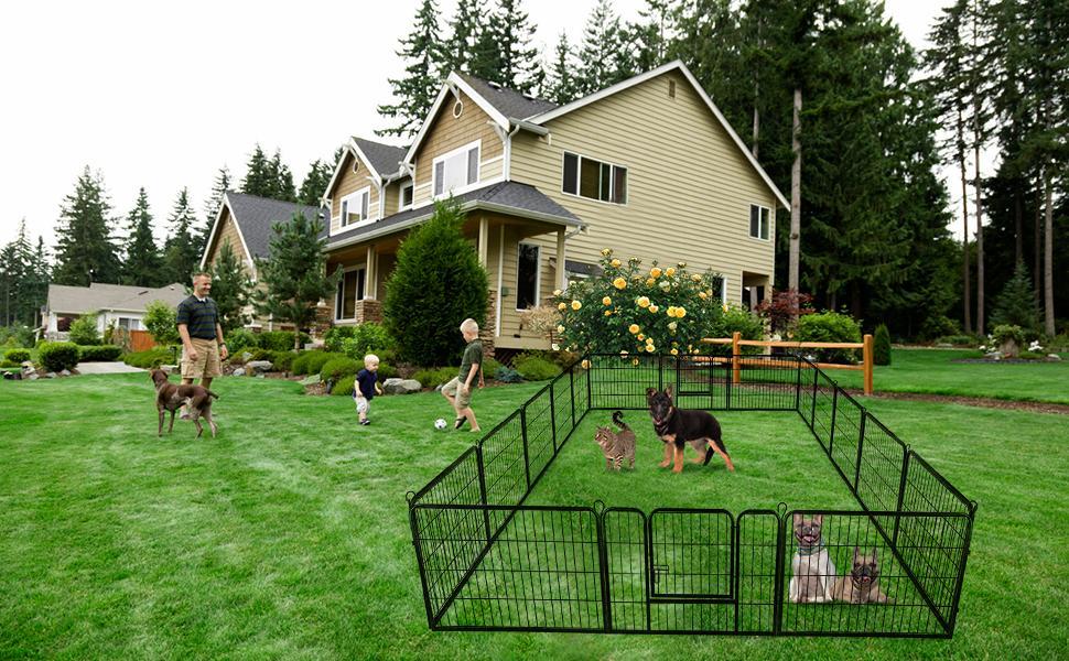 outdoor dog playen