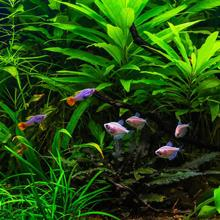 Aquariums or Fish Tanks