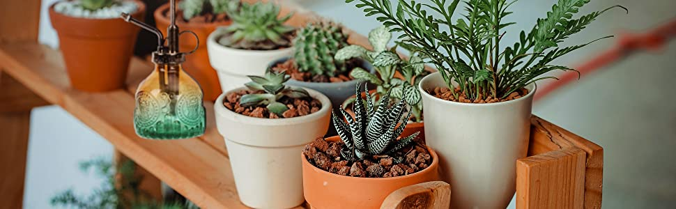 Great for Plant Lovers
