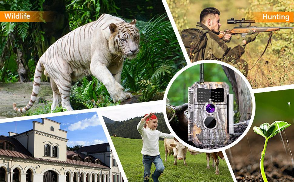 wifi wildlife camera