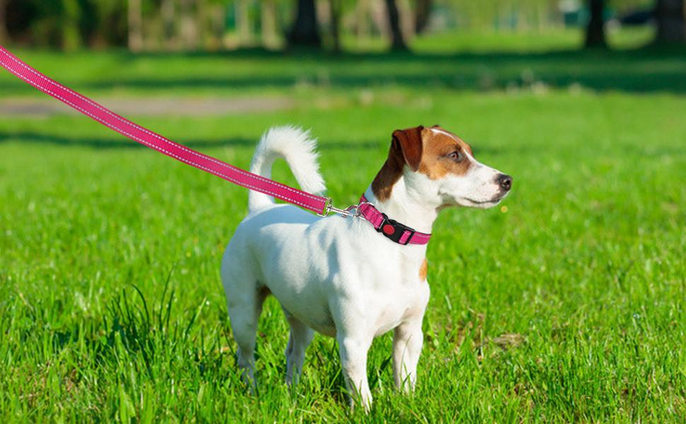 hotpink quick release buckle dog collar