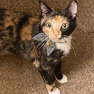 cat collar with bowtie