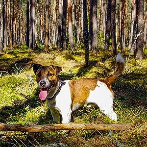 SMALL DOG 300X300