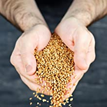 Whole Grains in Hands