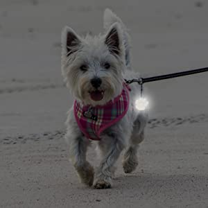Hang safety reflector on dog leashes