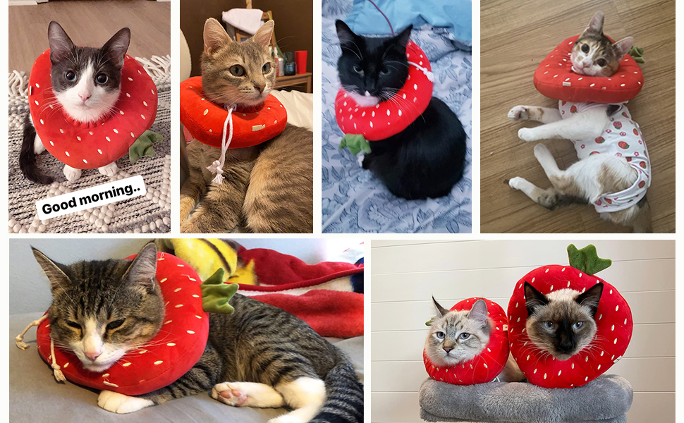 Cute strawberry cat recovery collar product display