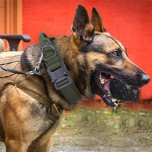 tactical dog collar