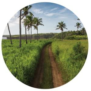 Heilala Vanilla in the Kingdom of Tonga Pure Vanilla Products