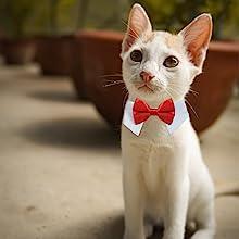 koolmox tux collar for pet