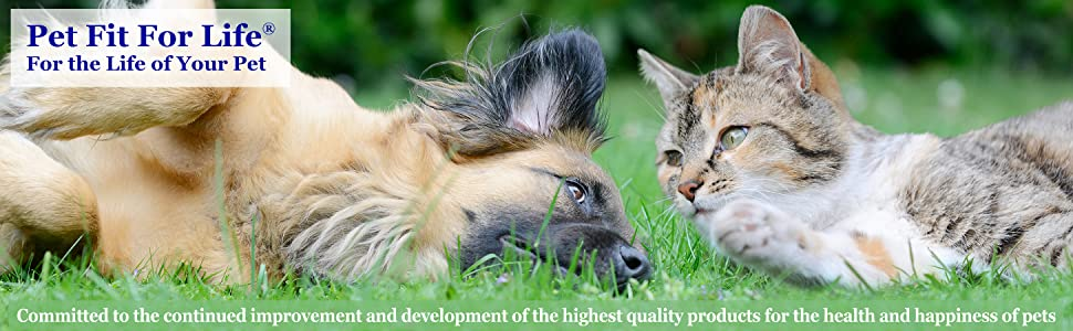 Healthy and happy dog and cat lying together in grass