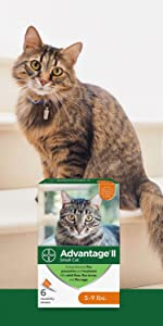 advantage small cat