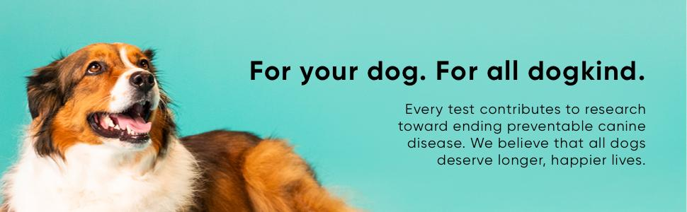An image of a dog. Every test contributes to research towards ending preventable canine disease