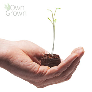 A hand holding a coconut coir pellet, with a small seedling growing out of the soil.