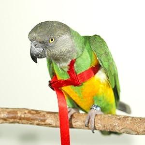 Senegal Parrot Aviator Harness Parrot Wizard Harness Set