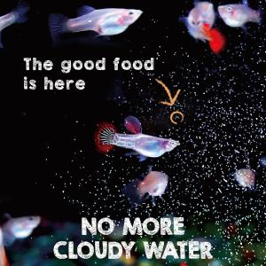 baby fish food, fry food, brine shrimp