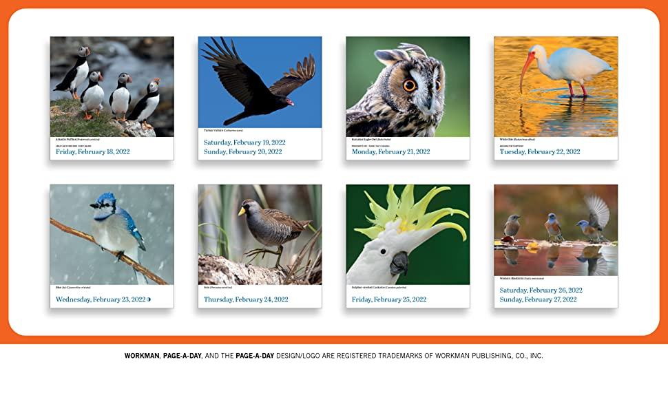 audubon bird page a day calendar gift eco recyclable plastic free