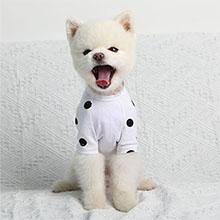 dog shirt model