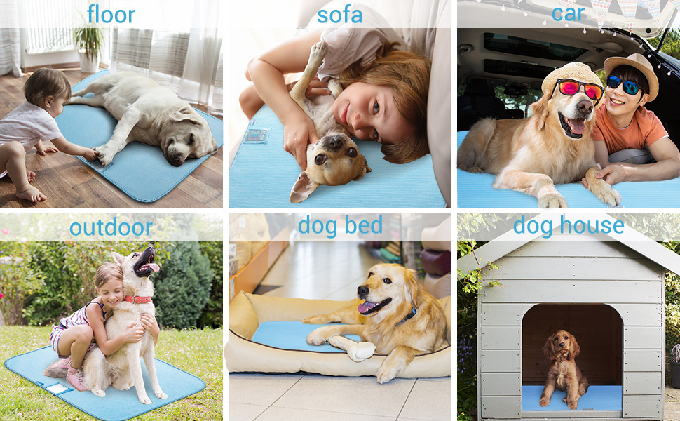 dog beds, kennels, crates, dog houses, sofas, floor, beds, car seats,
