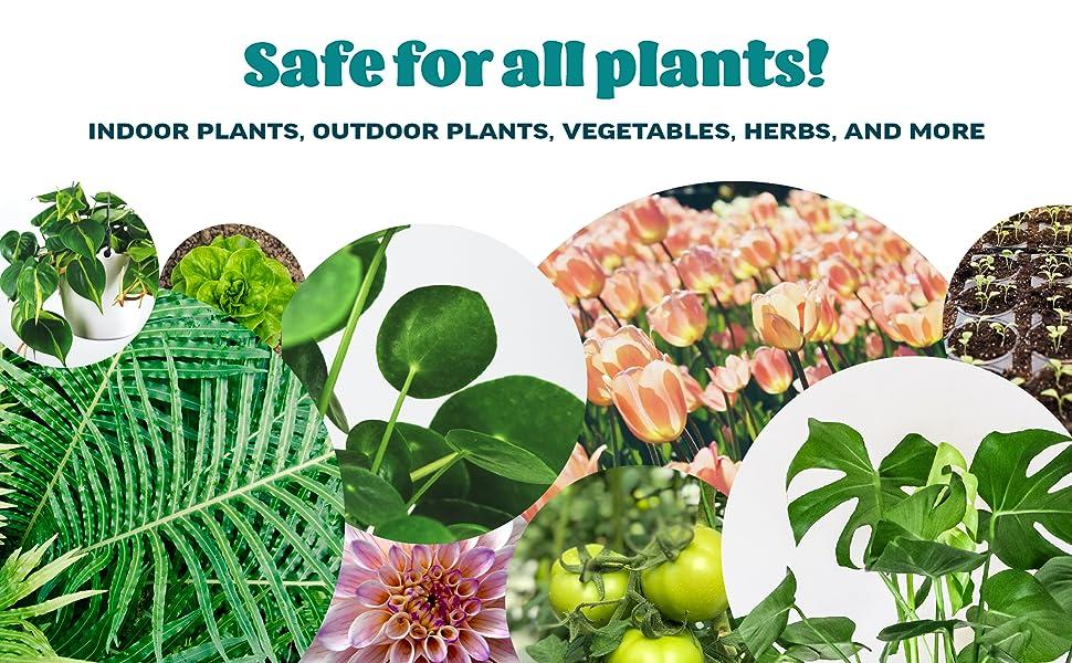 safe for all indoor plants