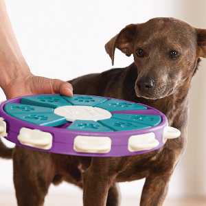 Nina Ottosson Outward Hound Dog Twister Interactive Puzzle Toy for Dogs Game