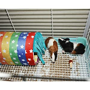 guineapig hideout