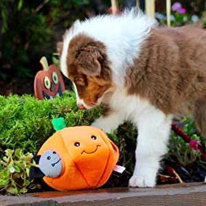 dog playing with pumpkin toy with bats