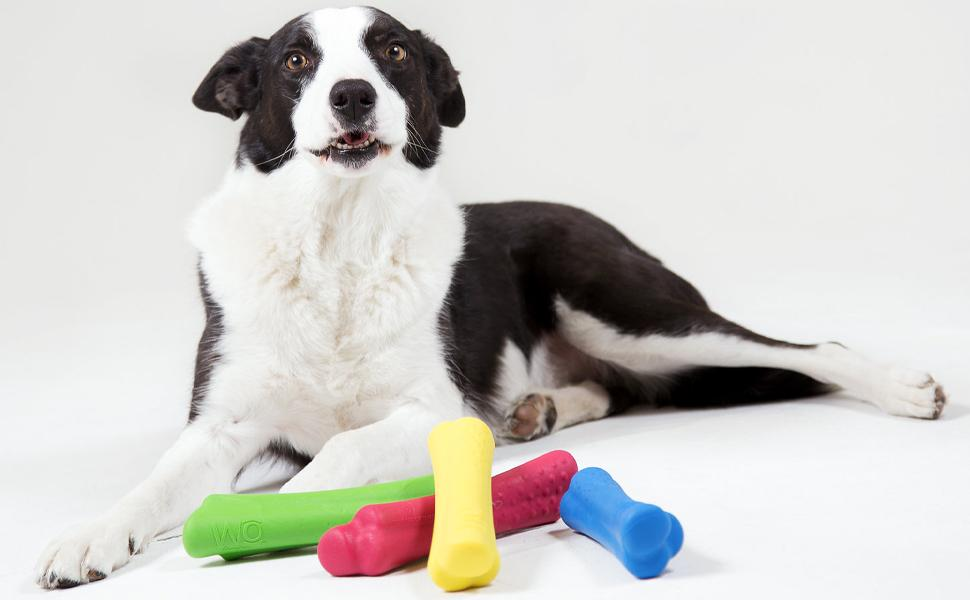 Dog with all four bones