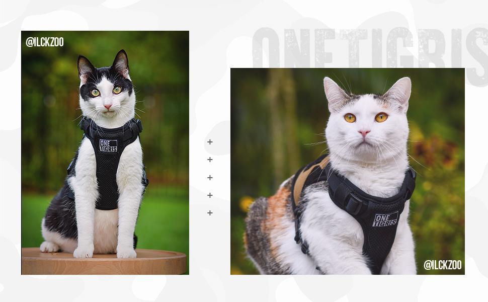 cat vest harness