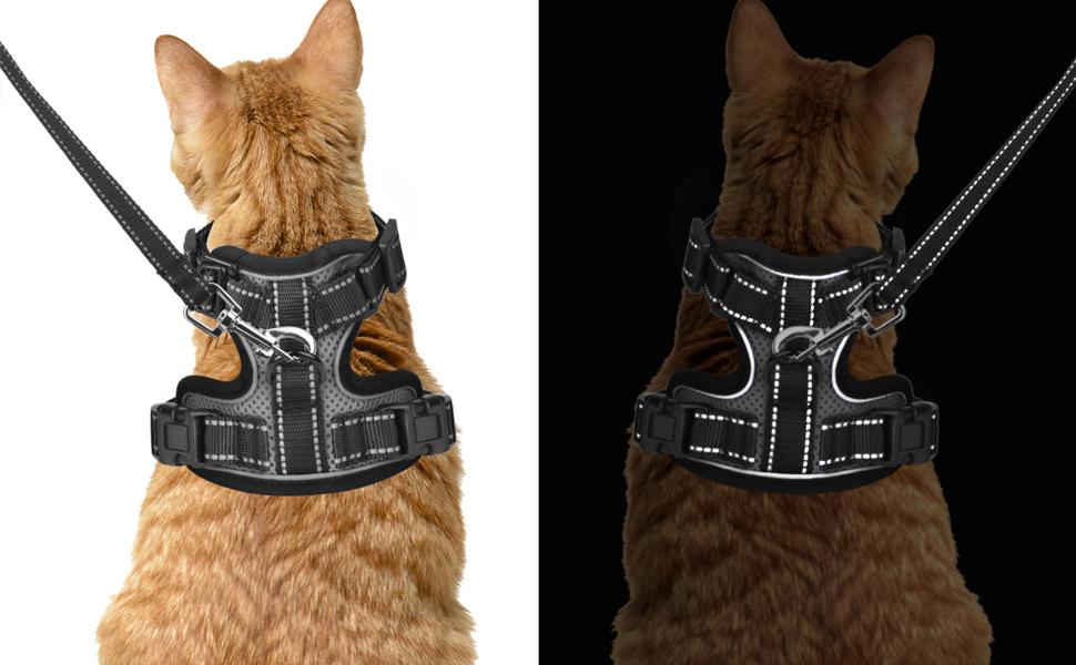 Cat Harness reflective at night