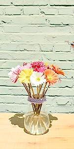 multicolor daisies