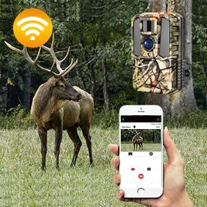 hunting video