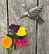Hummingbird, Cute Pair