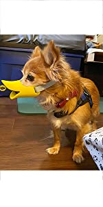 Dog Duck Muzzles