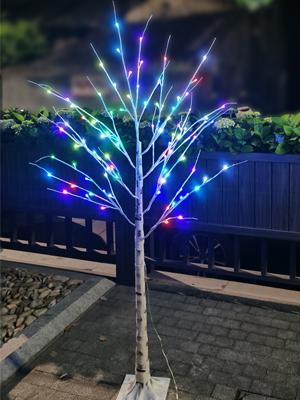 multicolor birch tree