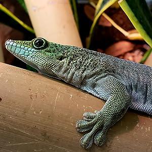 gecko on bamboo