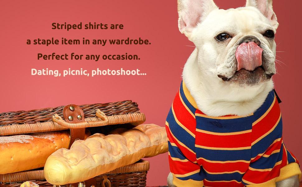 dog striped shirt colour