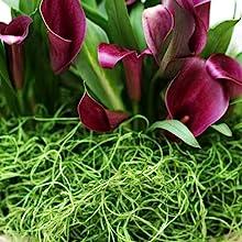 Spanish Moss Soil Topper