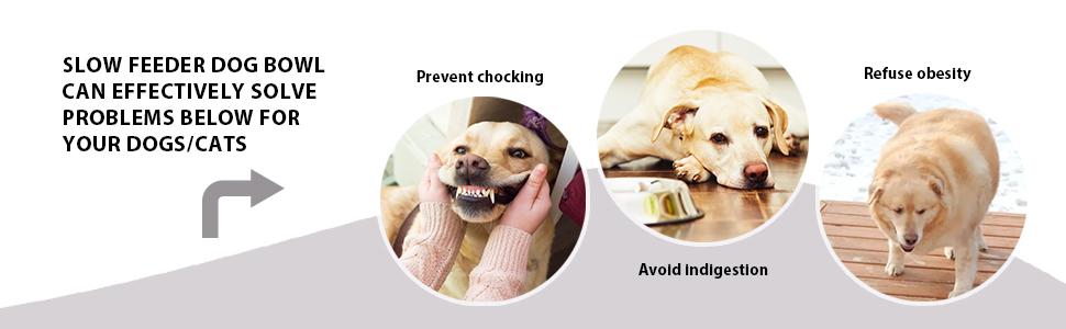 Let dogs develop good eating habits