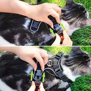cat walking harness
