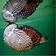 underwater wild