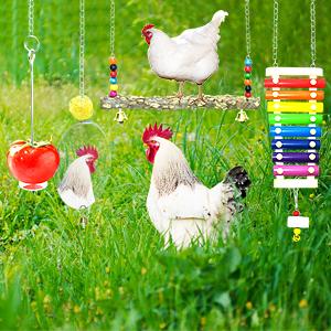 chicken coop accessories toys