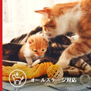 オールステージ対応を示すアイコンと二匹の親子の茶トラ猫の写真。