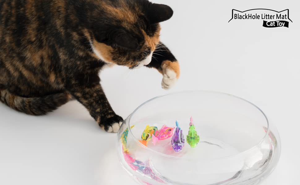 cat trying to catch swimming robot fish