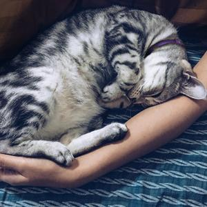 calming collar for cats